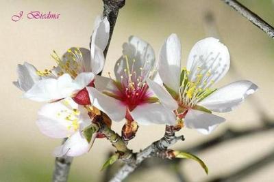 20090227202721-flores.jpg